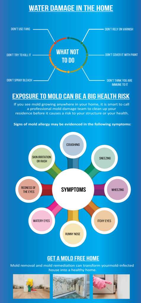 why mold is dangerous
