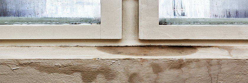 Understanding Mold Mold Remediation Specialists Mold